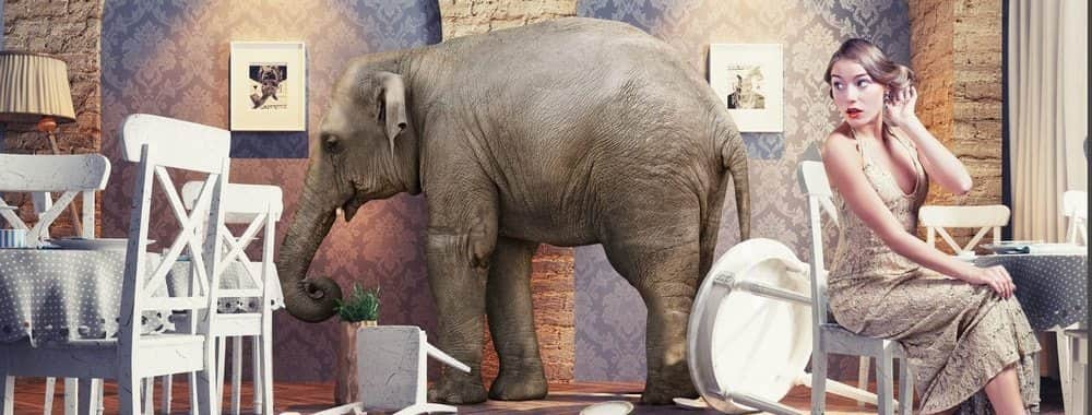 Elephant In Room That Needs To Be >> Why You Should Address The Elephant In The Room Smartminds